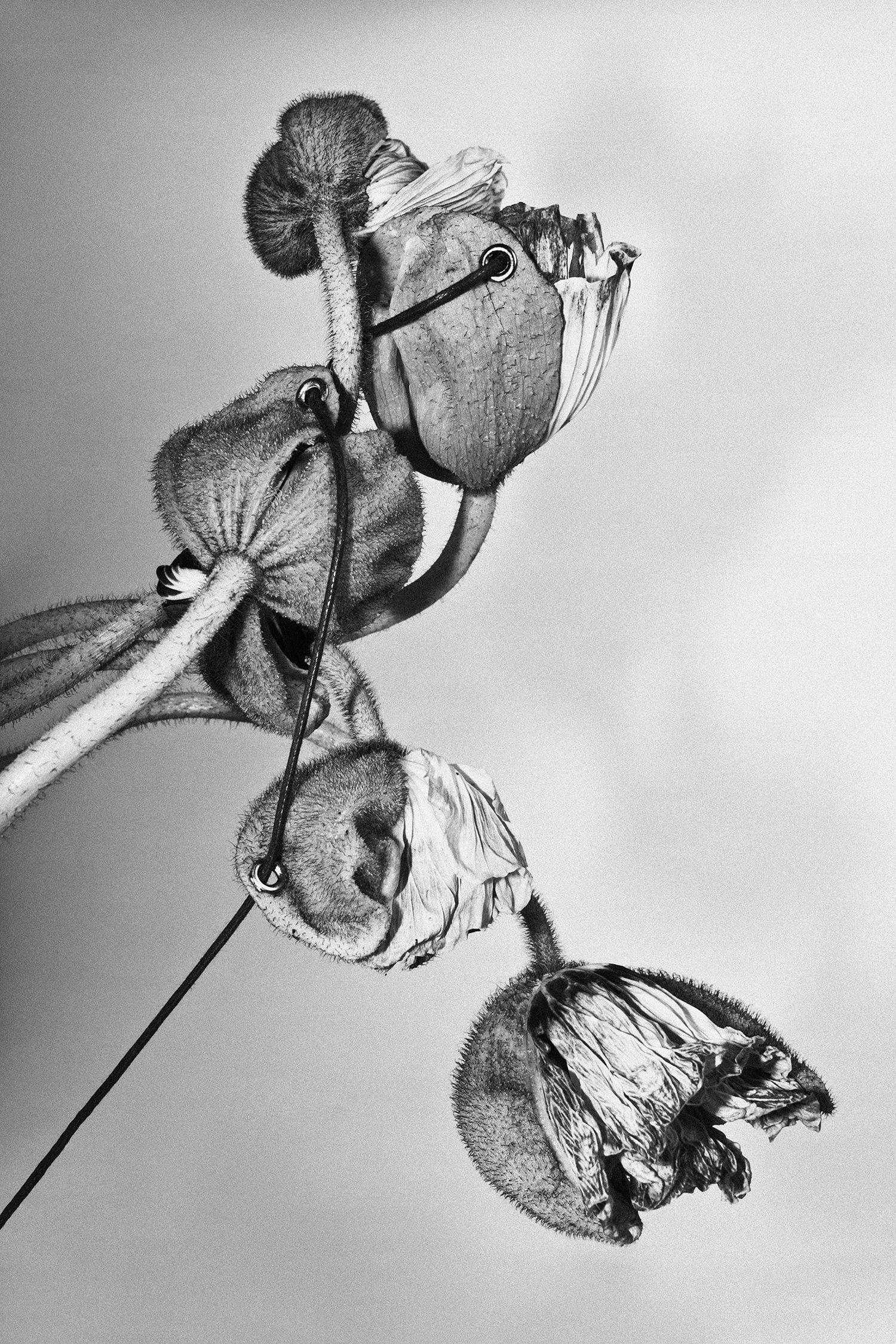 Leurs printemps, ode aux fleurs